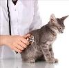 Ветеринарные клиники в Свече